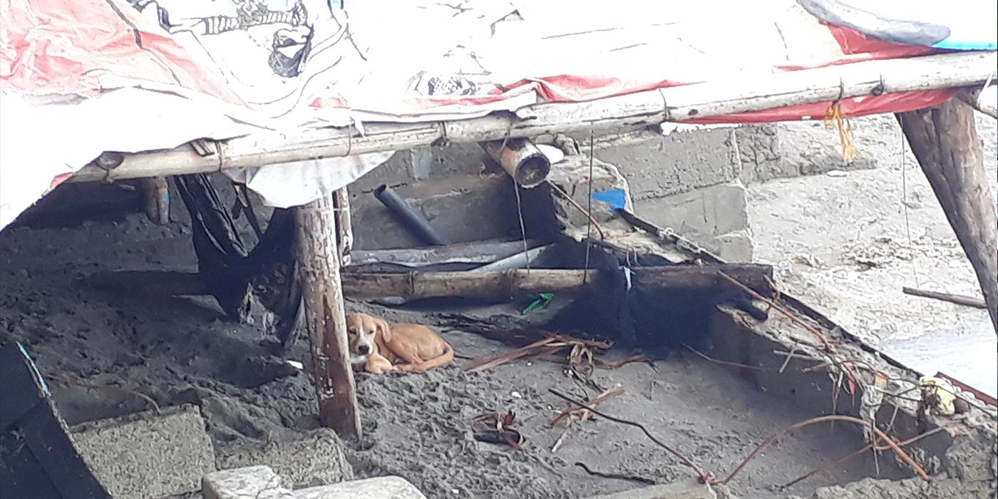 das Haus von Freunden, nach dem Taifun, mit dem trauerndem Hund